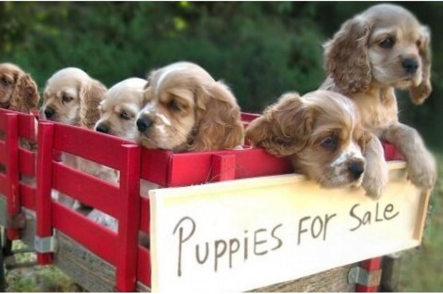 10 речей, які необхідно розглянути перед покупкою собаки
