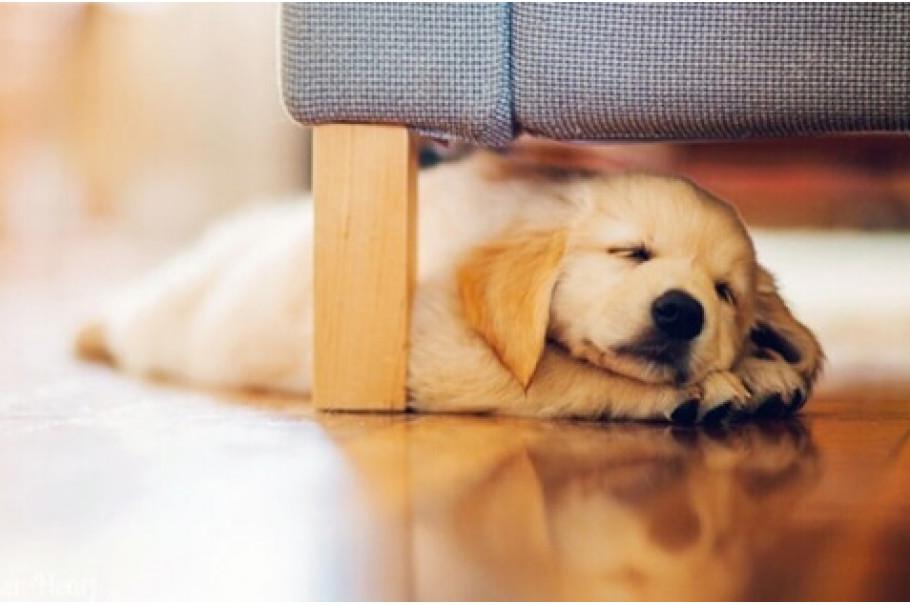 Собака для квартиры