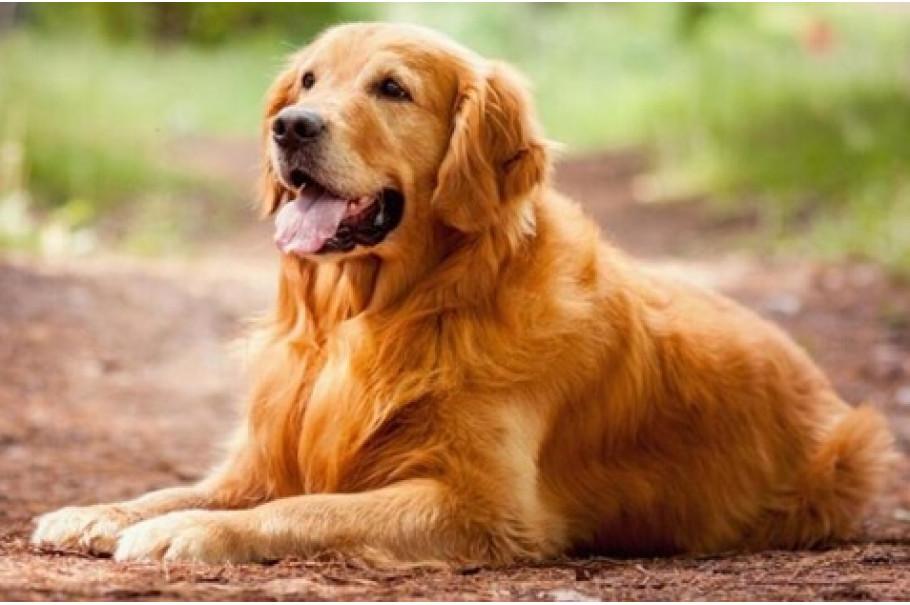 Підбірка фактів про собак